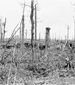 Photograph of dug-outs and surrounding damaged trees, Ypres Salient, July 1916